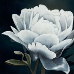 floral art, flowers, peony, peonies